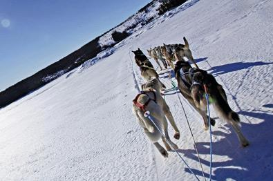 Thumbnail for Dog sledding