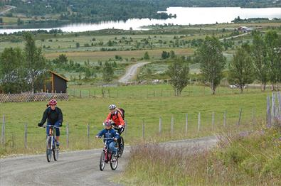 On the cycling tour around Lake Vasetvatnet one passes through idyllic summer farming landscape.