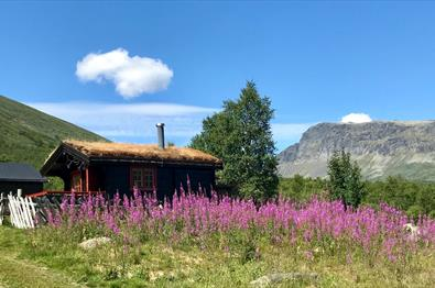 Mountain farm building with grass roof, surrounded by  rosebay willowherb (fireweed) in bloom