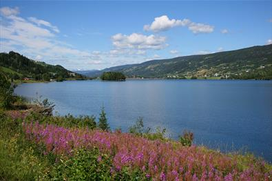 Pink flowers along the shore of Lake Strandefjorden. Blue is the lake, and blue is the sky.