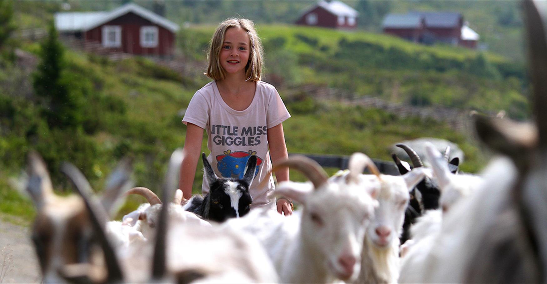 Girl With goat herd at Olestølen.