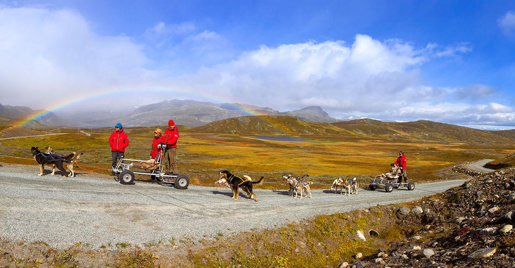 Dog sledding on wheels with Beito Husky Tours.