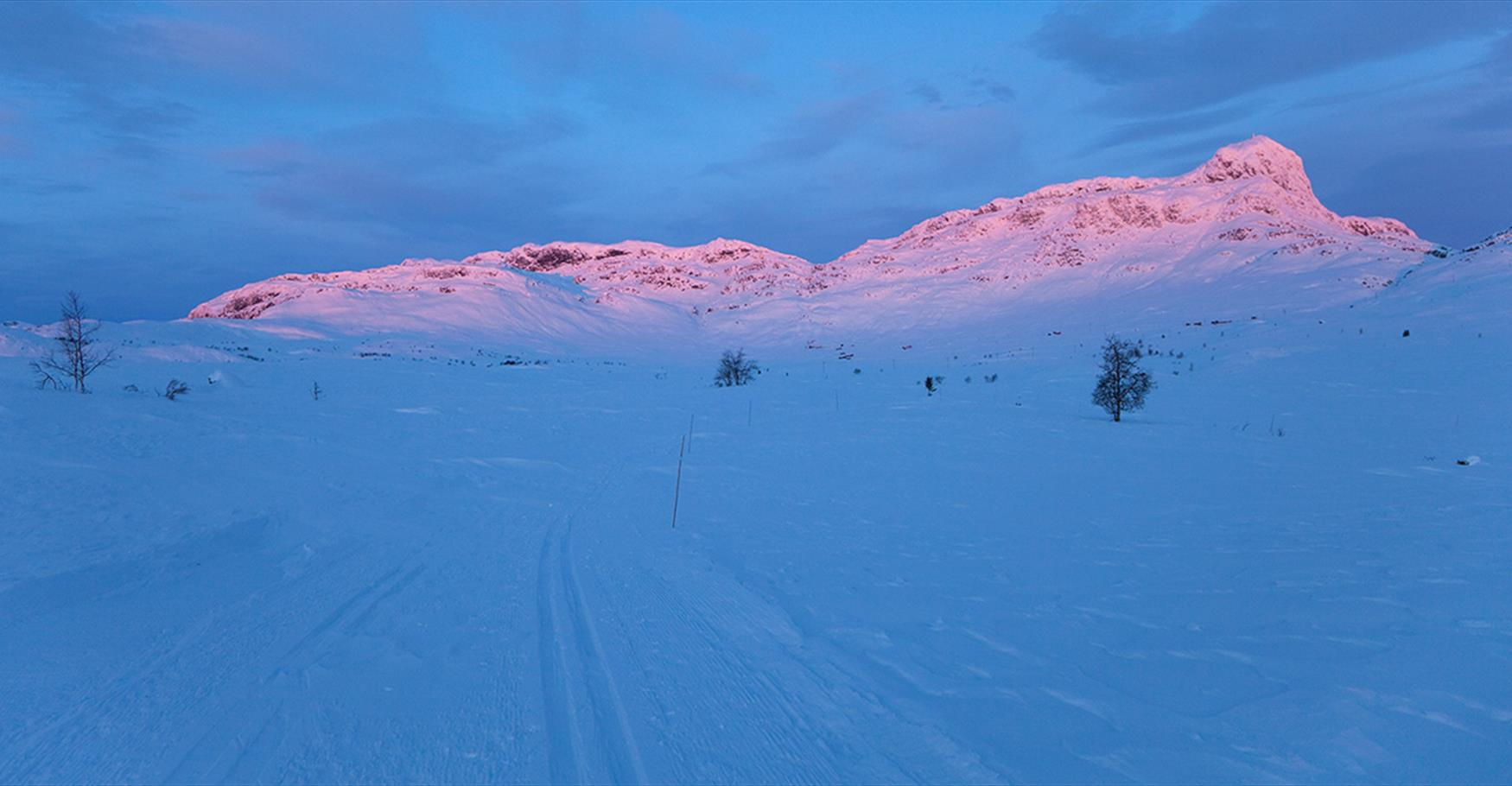 December morning in the cross country trails at Beitostølen with Bitihorn in the background.