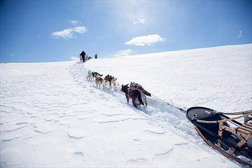Beito Husky Tours - Dog sledding in the spring on Valdresflya