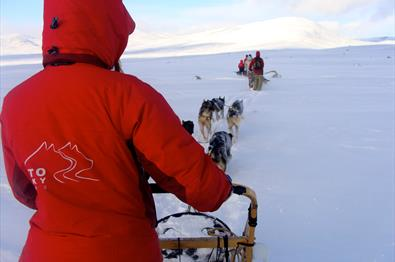 Beito Husky Tours - Chinook's adventure - dogsledding, half day trip, Beitostølen