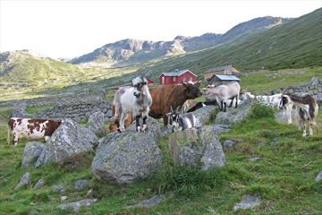Open farm at Sparstadtrøe in Sanddalen