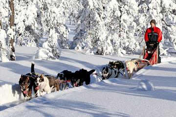 Bjerkeli Villmarksopplevelser - Dog sledding, overnight trips