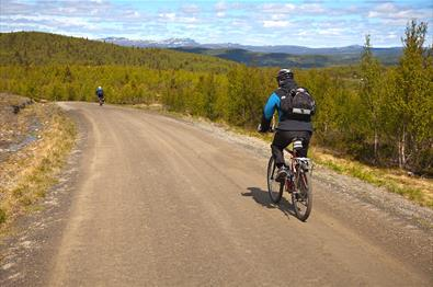 Cyclists on a farm road in the upper birch forest around the tree line.