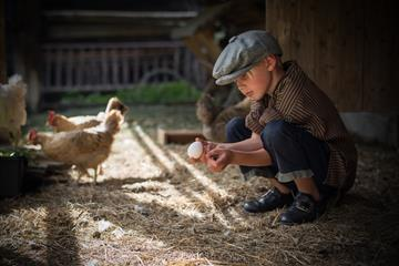 A boy plays with the hens at the museum's farm.