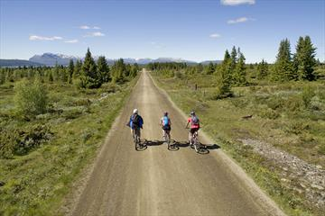 Three cyclists on a broad farming road through open spruce forest with mountains in the far background. Mjølkevegen at Furuset.
