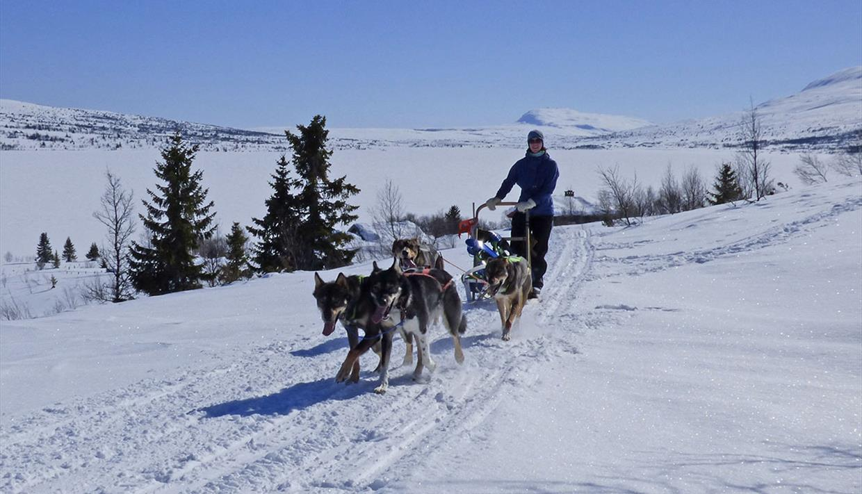 Dog team pulling a sled in open mountainous winter landscape.