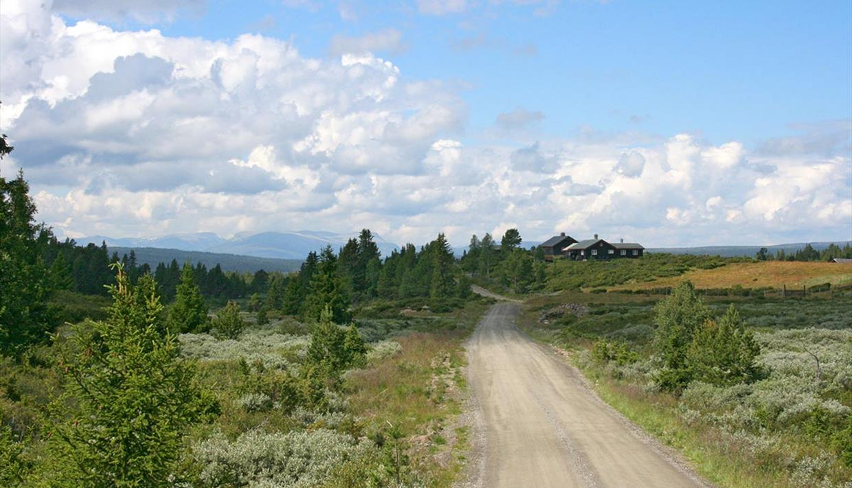 A gravel road just over the tree line with bush vegetation, a few spruce trees, a farm house and a view to the mountains.