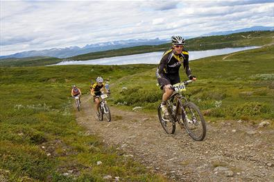 Mountain bikers on a track over the high plateau Syndisfjellet. In the background Jotunheimens peaks can be seen.